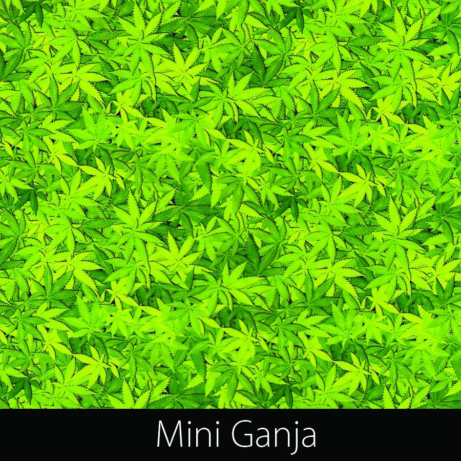 http://kidsgameon.com/wp-content/uploads/2016/10/Mini-Ganja.jpg