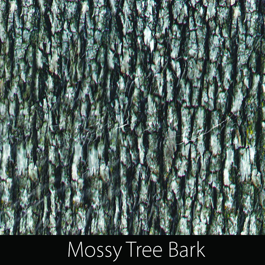 http://kidsgameon.com/wp-content/uploads/2016/10/Mossy-Tree-Bark.jpg